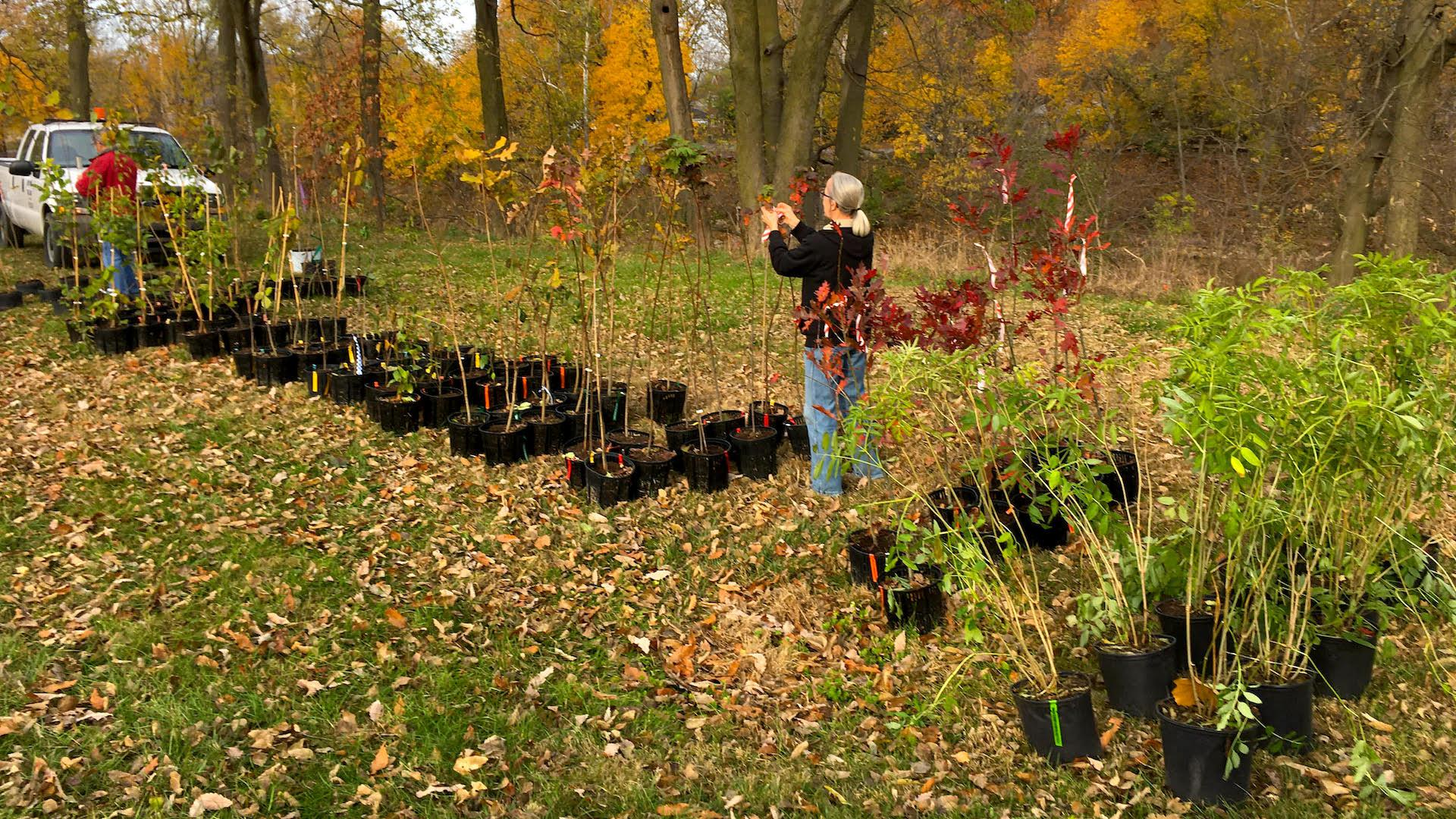 trees-lined-up-to-be-planted